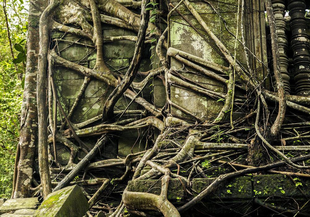 Trees taking back the jungle