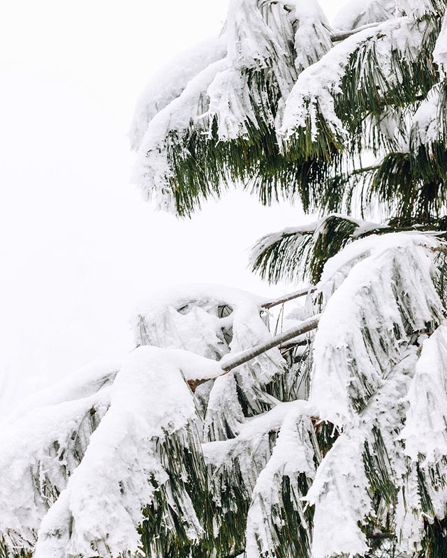 obligatory snow pic for snowiest feb on record 👏👏👏 . . . . #lakesuperior #minnesotawinter #optoutside #duluth #onlyinmn #minnesota #northshore #minnstagramers #capturemn #captureminnesota #citybynature  #chasinglight #flashesofdelight #byfolk #livefolk #makemoments #momentslikethese