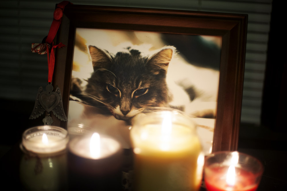 """This is from our """"Meowmorial""""...we shared  drinks  and told stories in his memory."""
