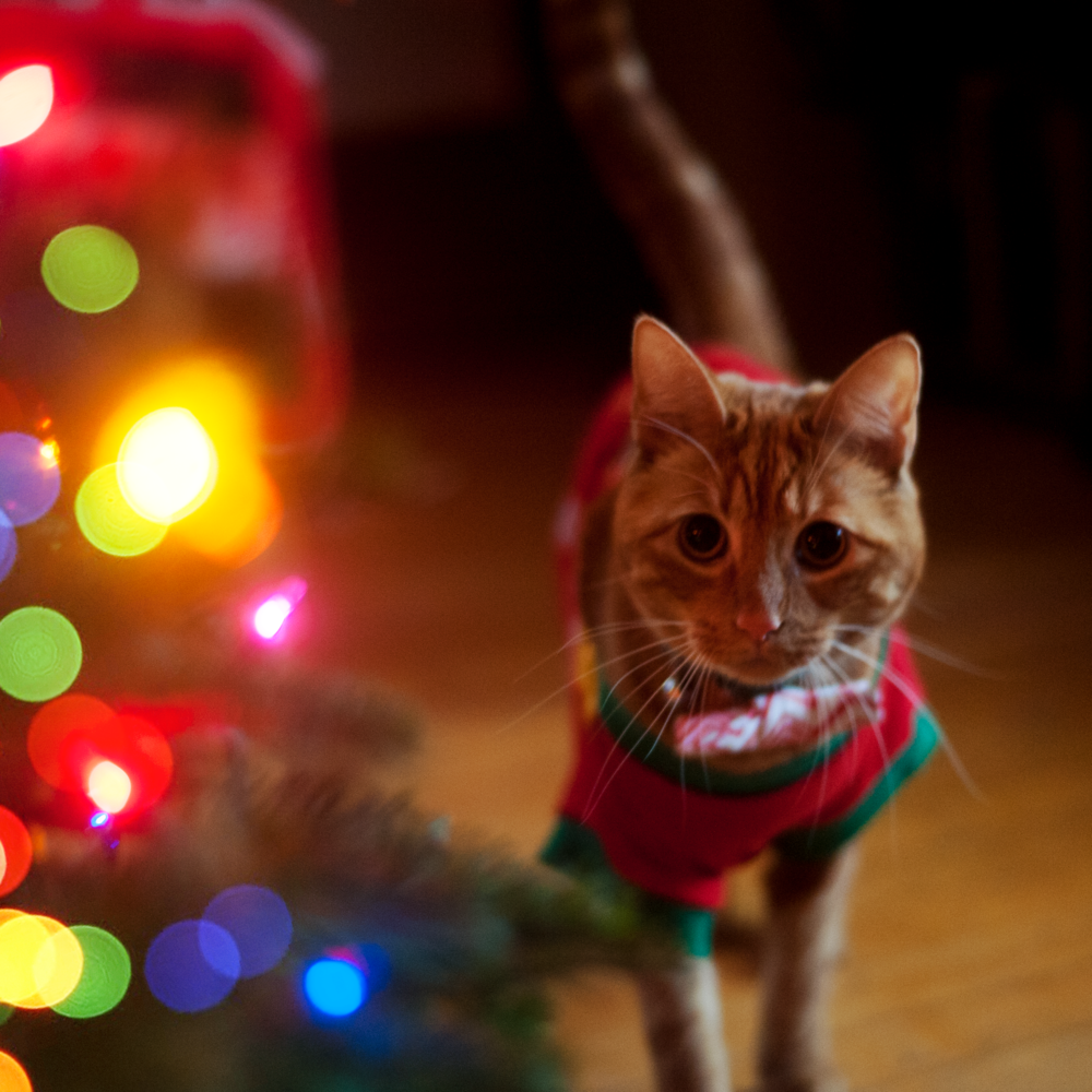 christmaskitty.png