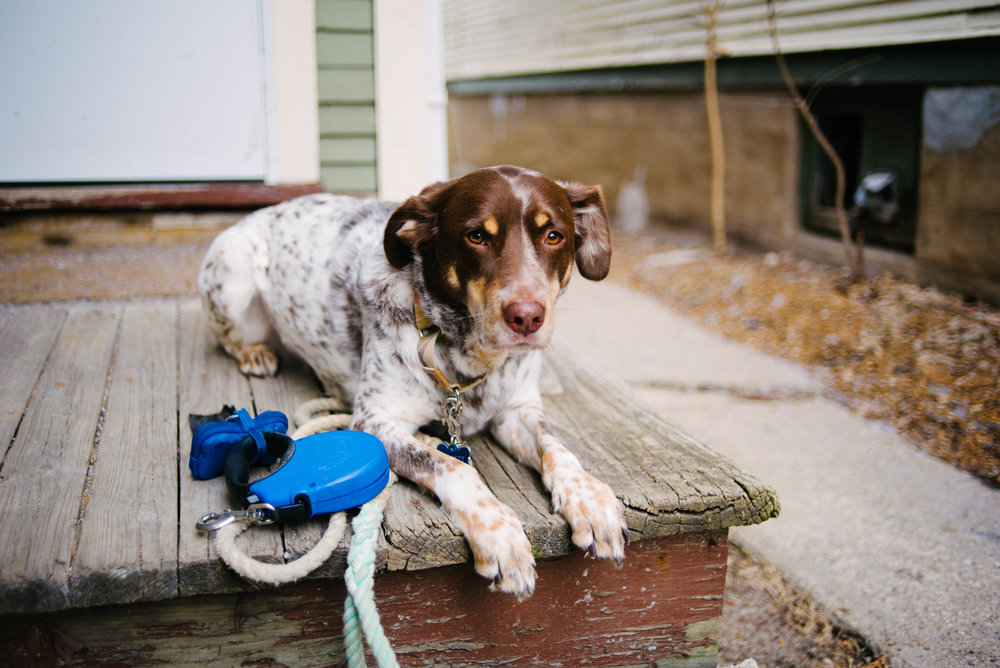 Do you use a fixed-length leash or a retractable leash? There is a reason Bullett is currently attached to the fixed-length here (also our neighborhood is not aesthetically pleasing right now)
