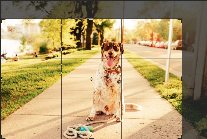 How handy is it that the crop tool has a grid in thirds!?