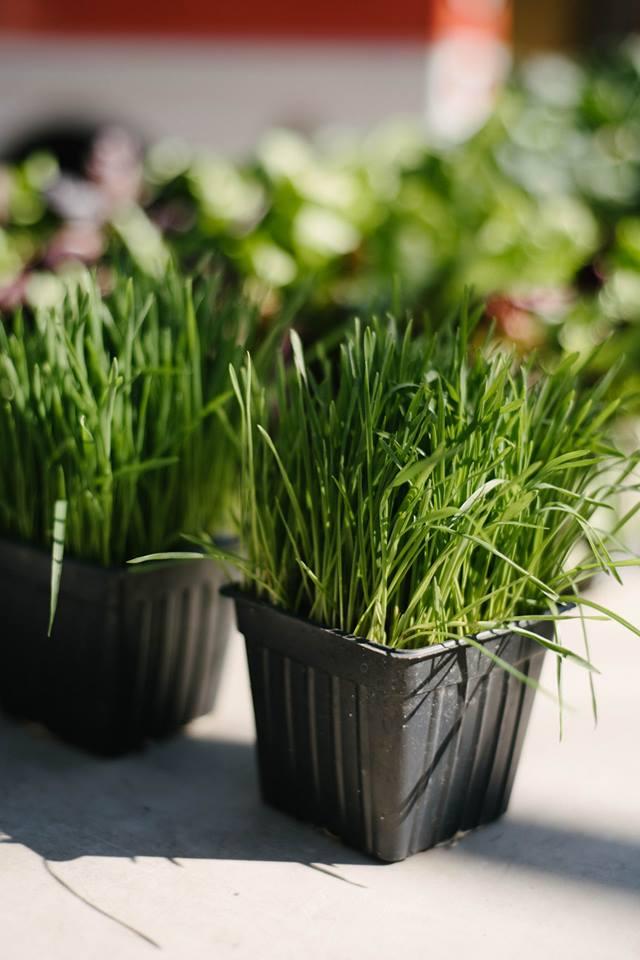 farmersmarketblog-catgrass.jpg
