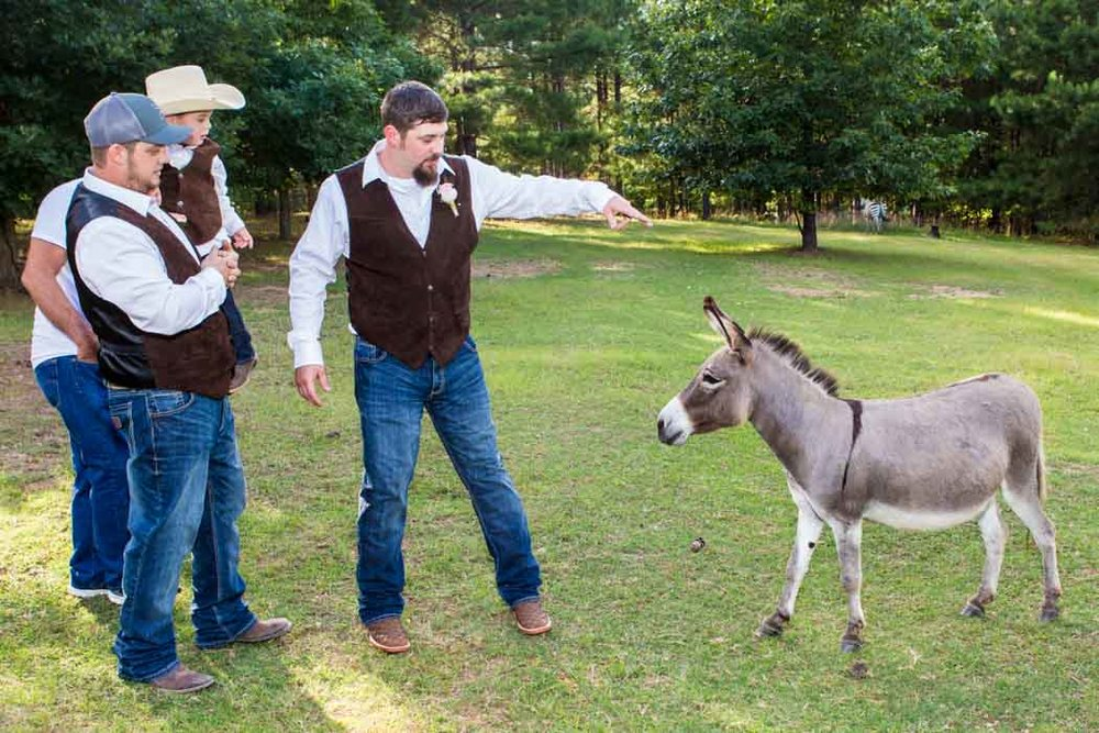 Groom shoos the donkey out of the shot