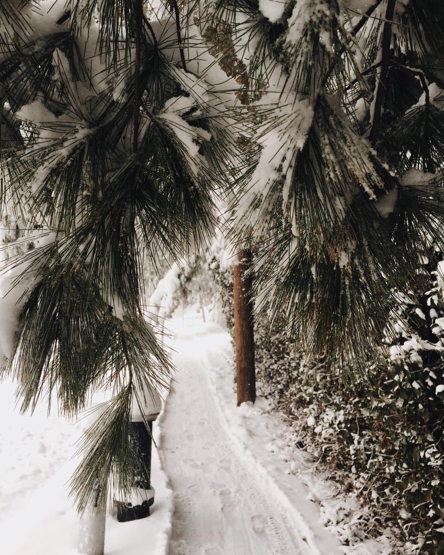 Photo Jan 23, 8 58 49 AM (1).jpg