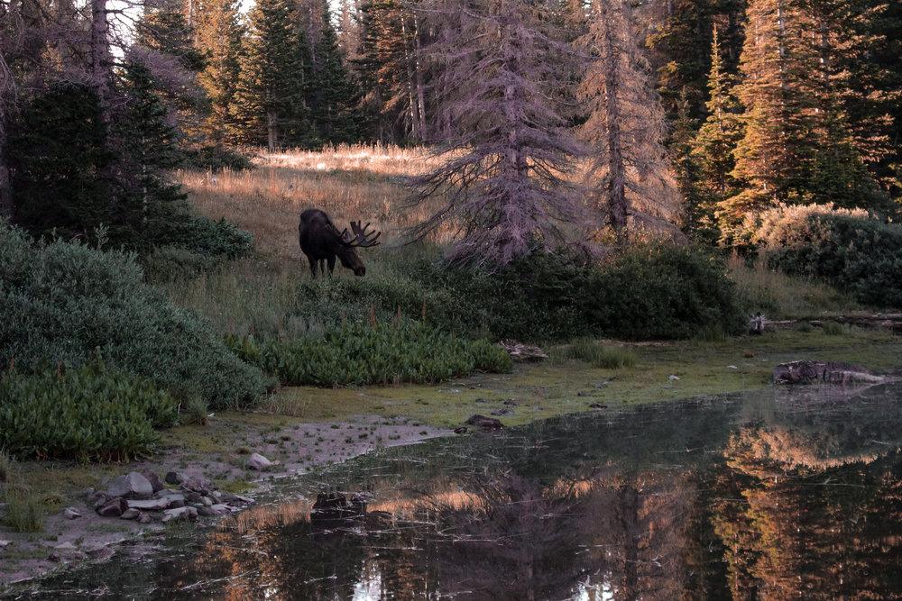 Wyoming (1 of 1)-3.jpg
