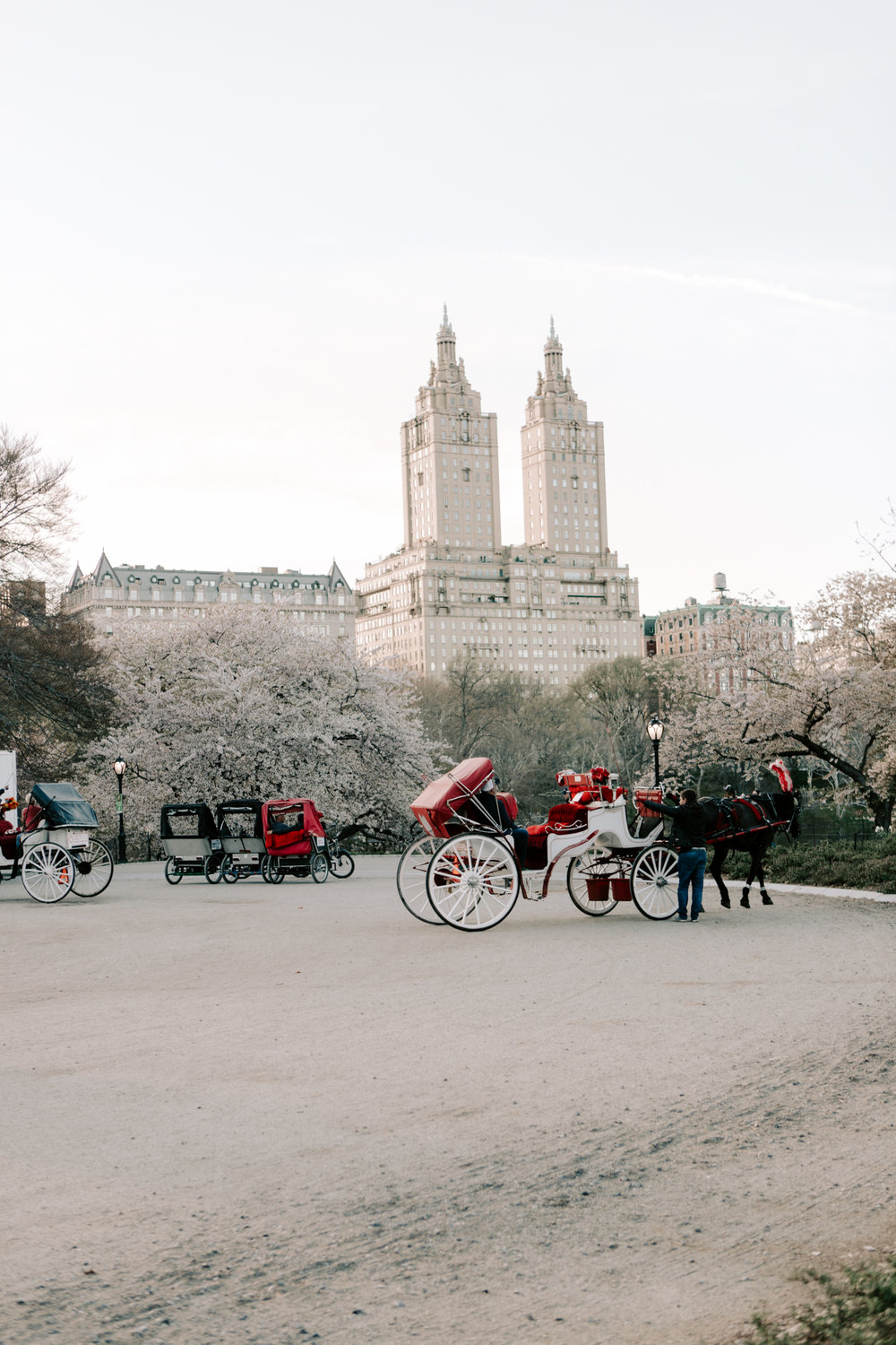 Central Park Horse Carriages