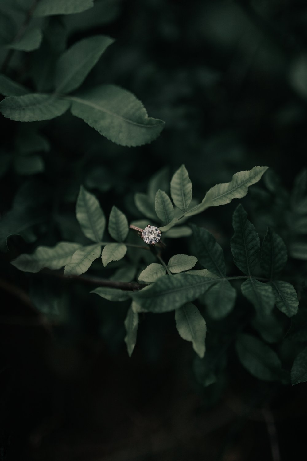 Rosados Box Eloise Ring By Hawaii Wedding Photographer Desiree Leilani