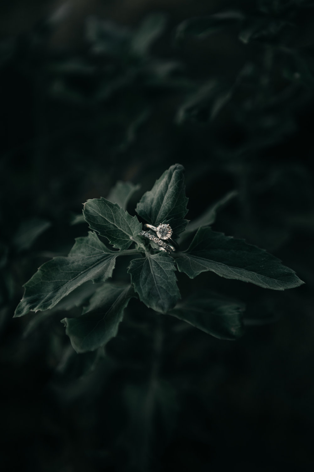 Ring in Plant Shot by Fine Art Wedding Photographer Desiree Leilani