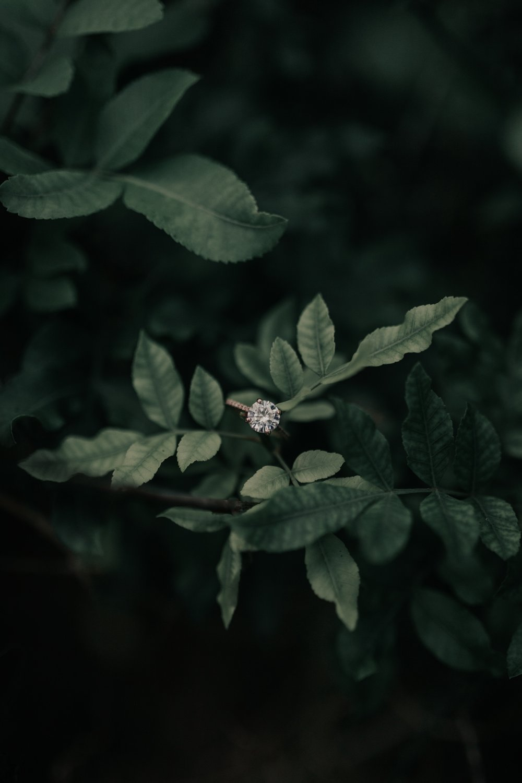 Central Park Fine Art Wedding Photographer