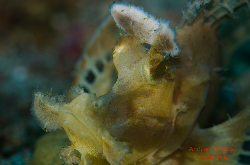 Anisiam diving-15.jpg