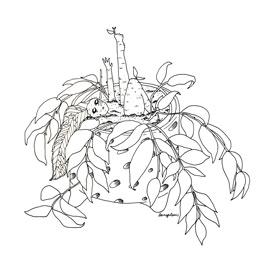 022.-Pot-Plants.jpg