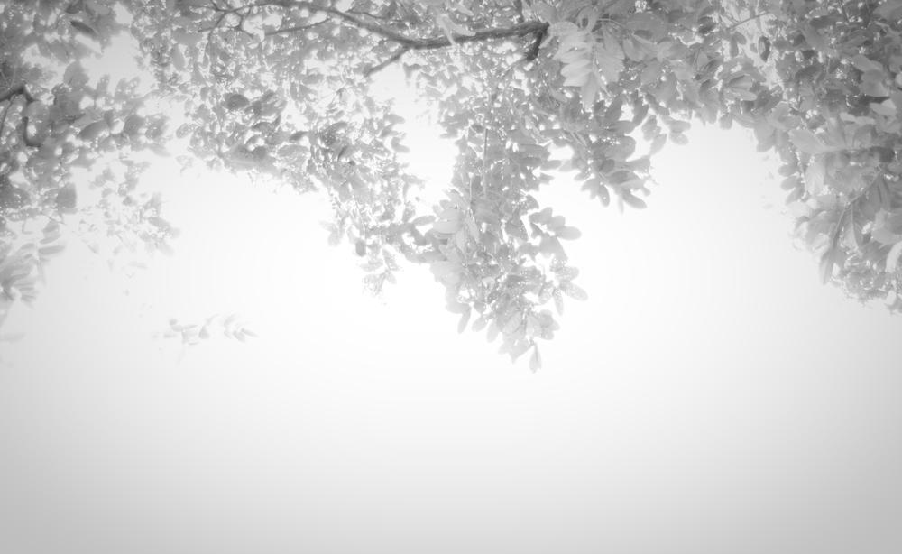 0033_leaves.jpg