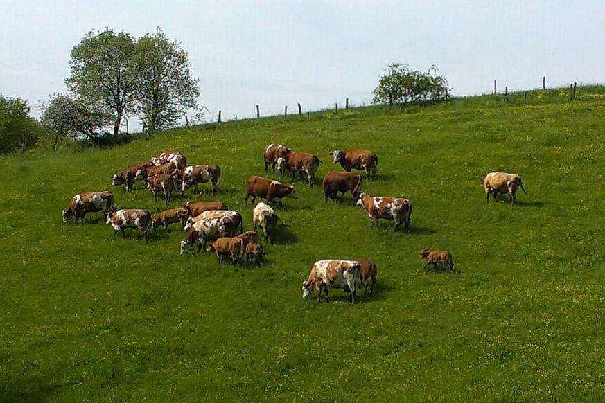 Rind- und Schweinefleisch