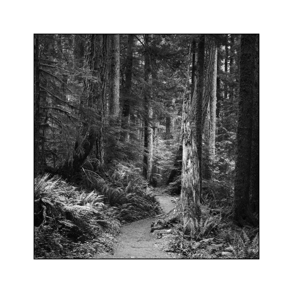 rain-forest-path.jpg