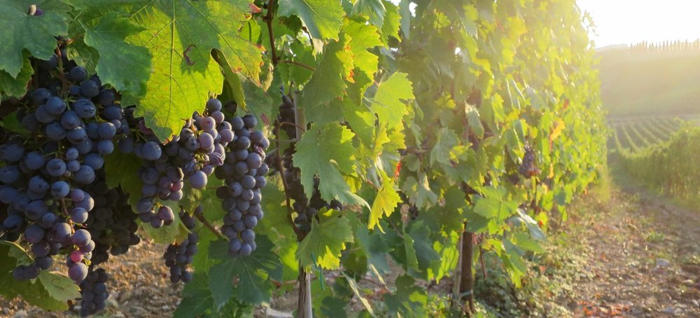 grapes-1200x545.jpg