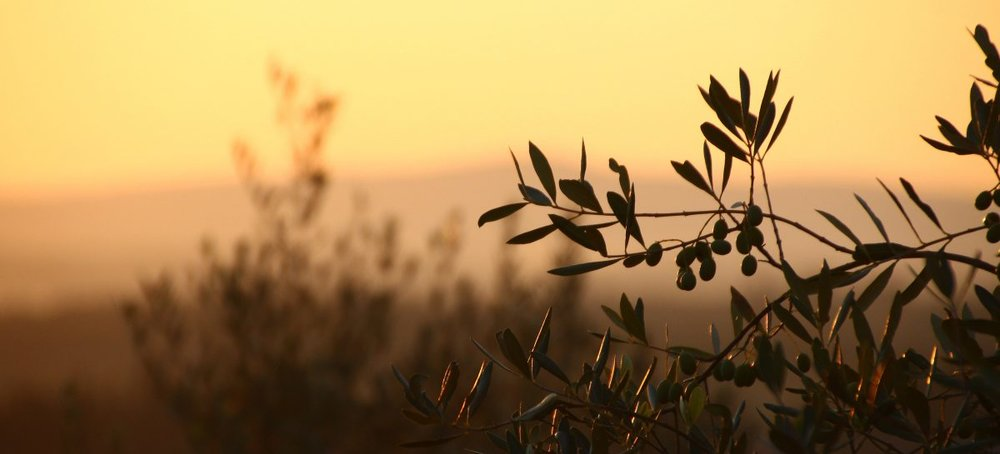 olivesunset-1200x545.jpg