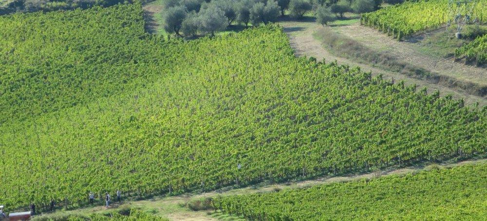vines-1200x545.jpg