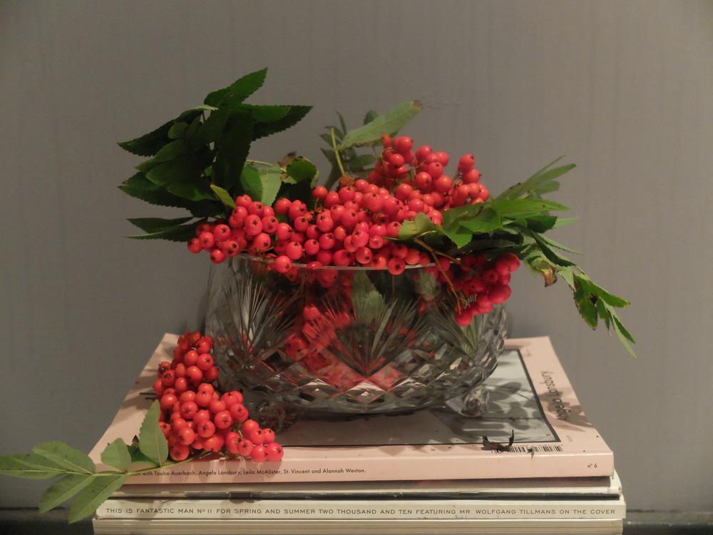 Rowan Berries again