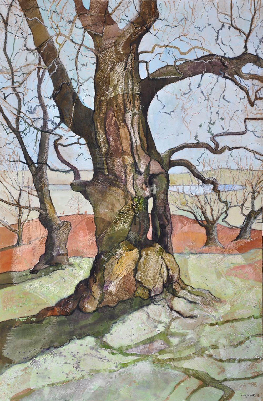 Bradgate oak, Spring sun
