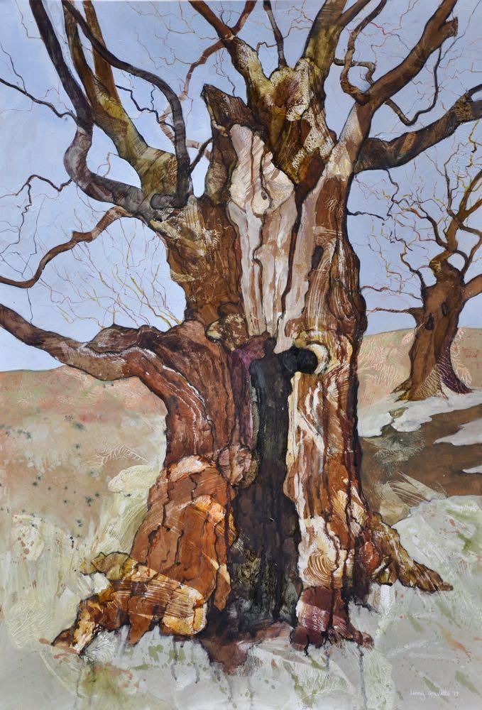 Hollow oak in Bradgate Park