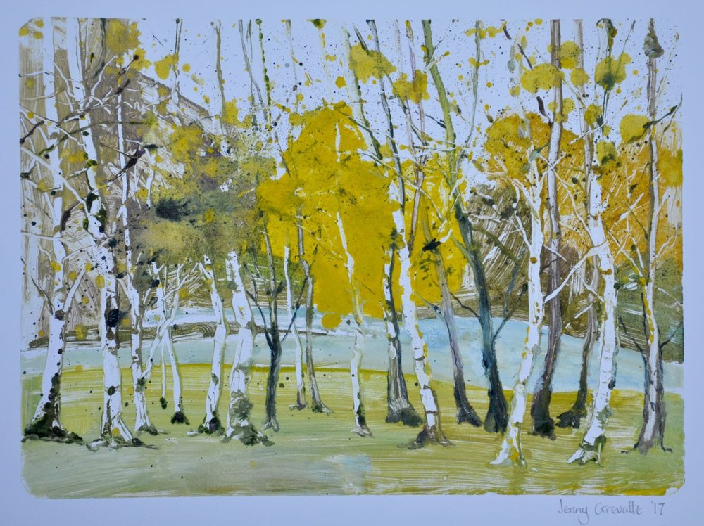 Spring in the siver birch wood