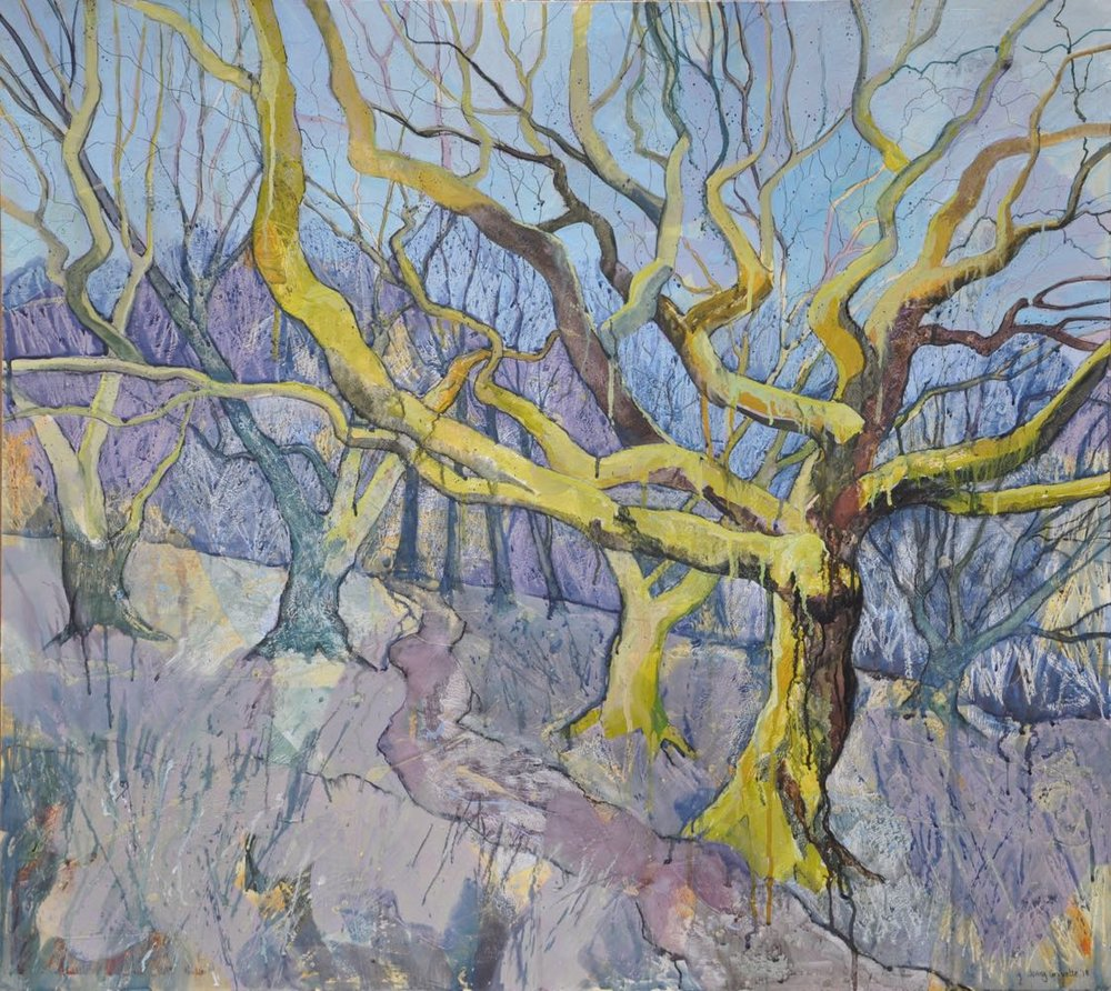 Mossy beech trees , Steeple Wood