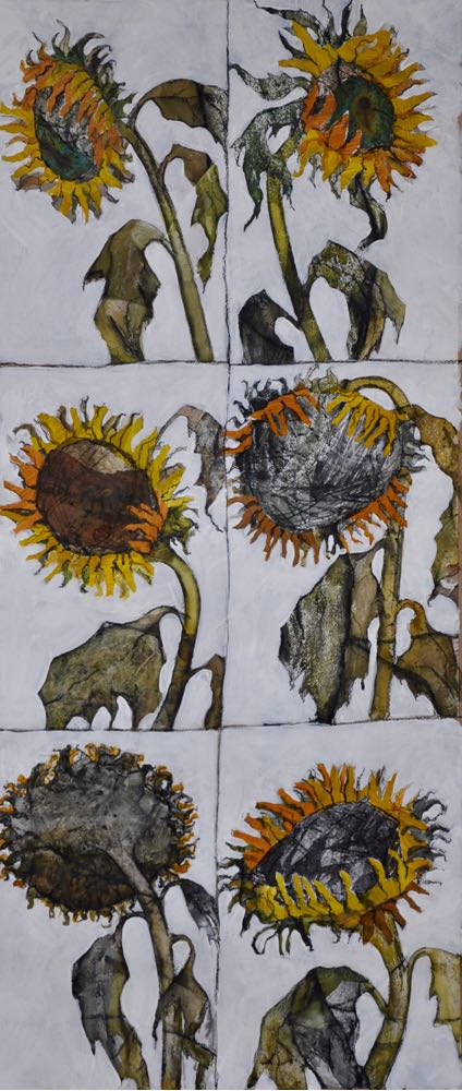 Portraits of sunflowers
