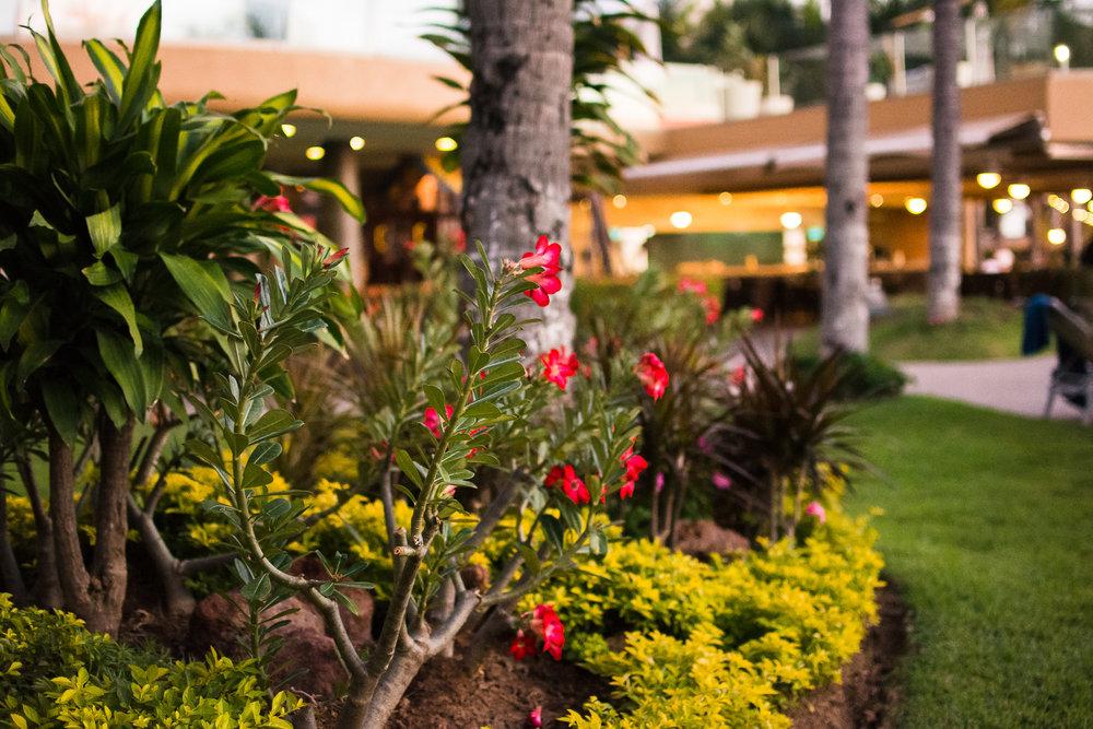 Manicured grounds of Sunset Plaza.