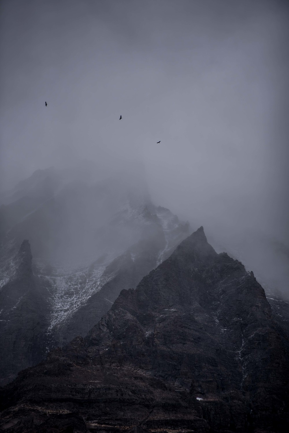 3 Condors hovering below the clouded Cuernos in Torres Del Paine.