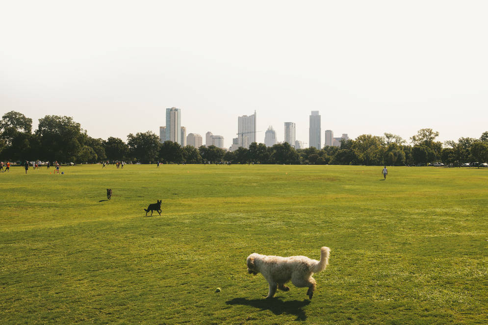0_4200_0_2800_one_USA_Austin_Zilker_025_NM.jpg