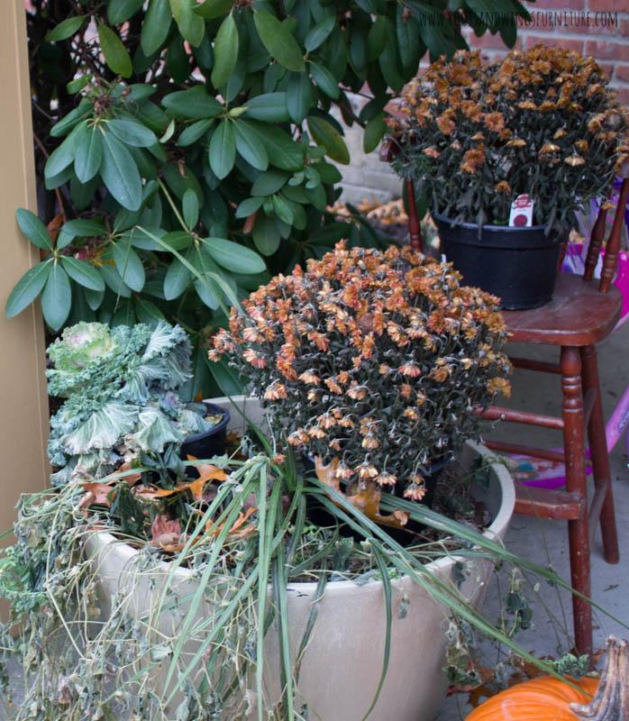 spray painted fall plants-2.jpg