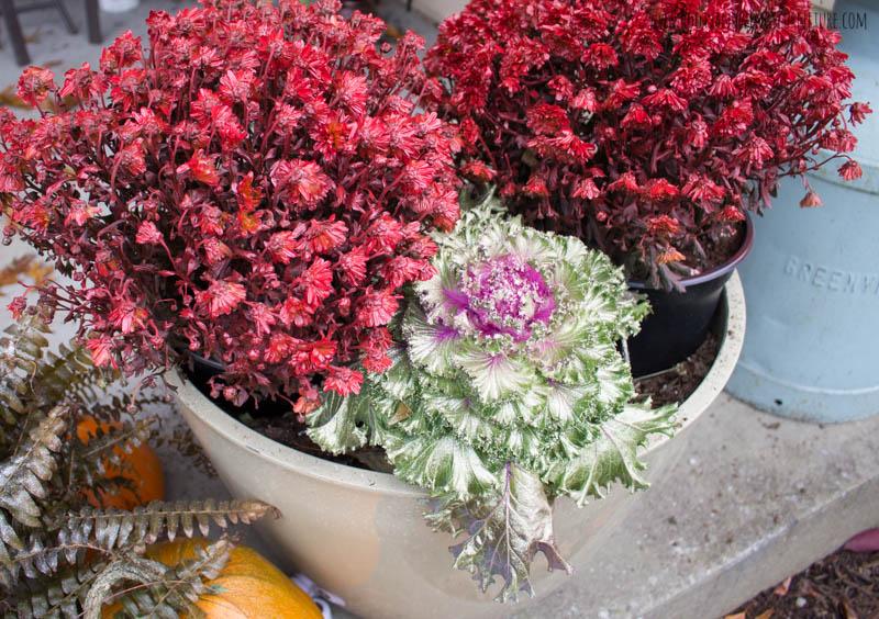 spray painted fall plants-5.jpg