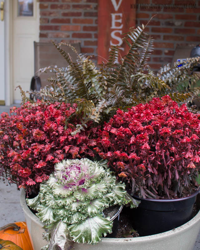 spray painted fall plants-6.jpg