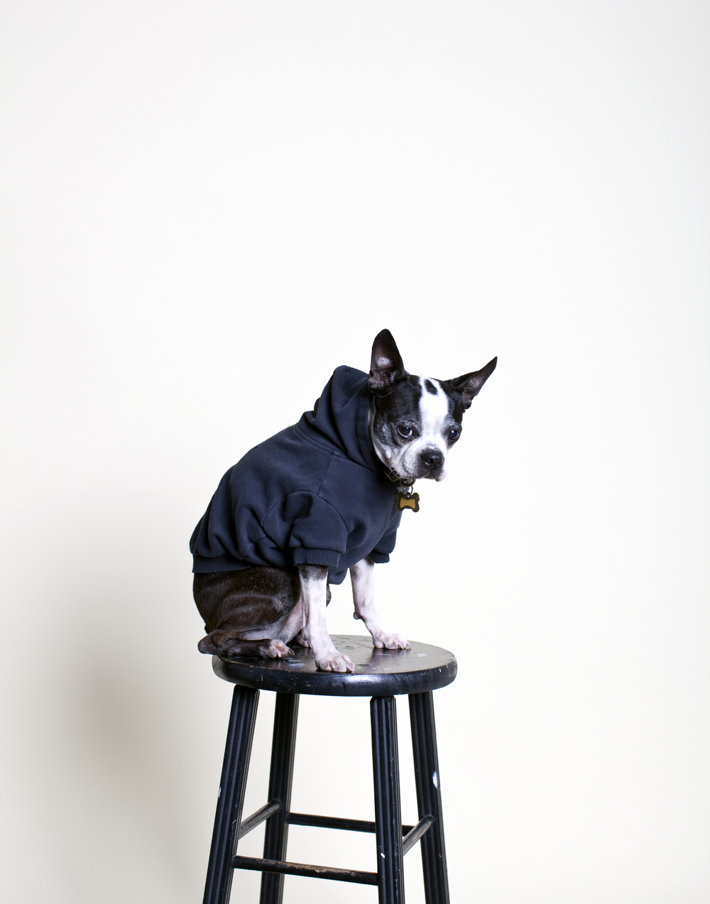 Pancake, age 10, testing lights in the studio.