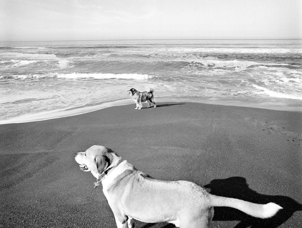 photographing dogs on the beach