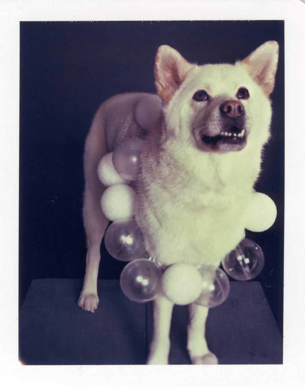 DoggieGaga_JesseFreidin6.jpg