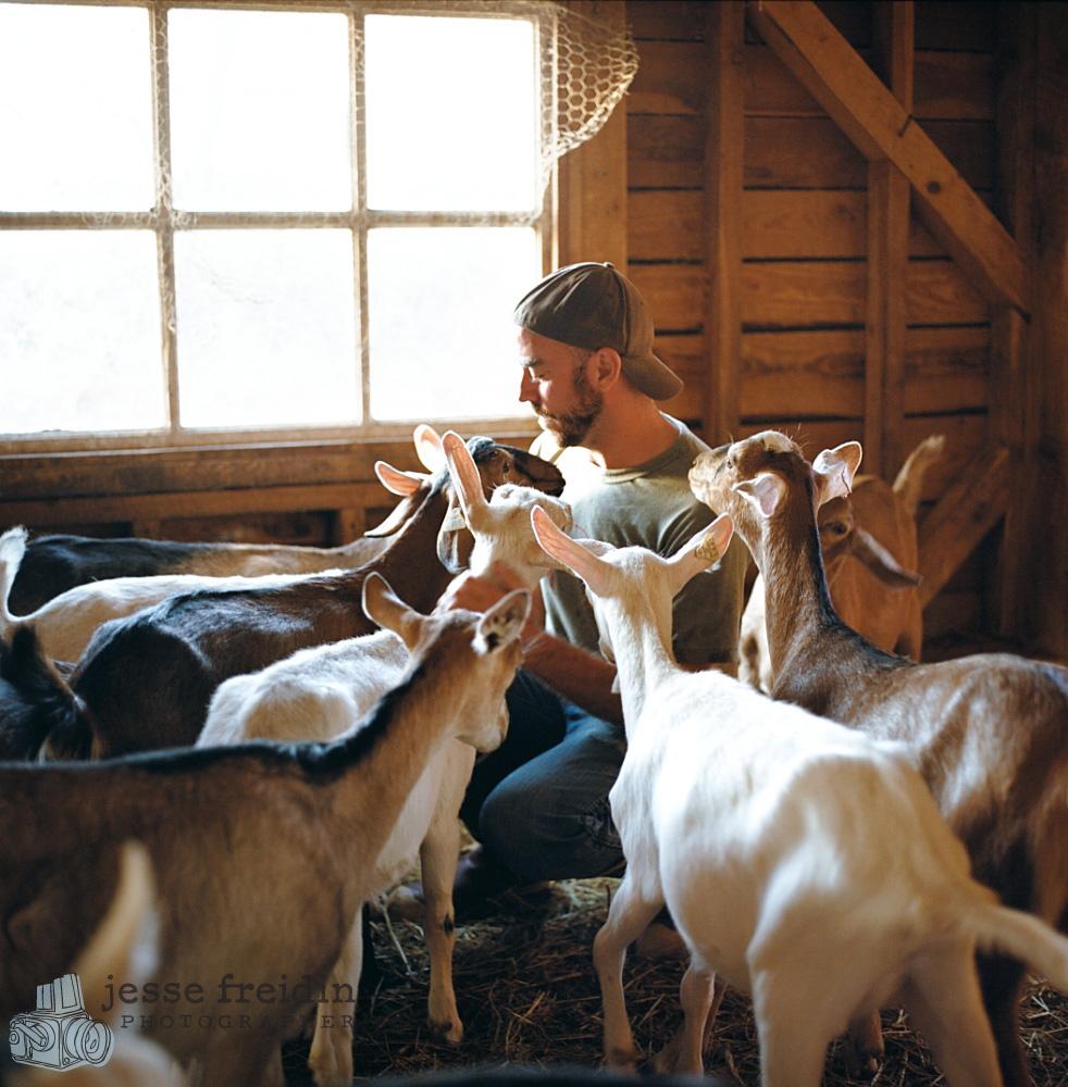 beekman 1802 farm goats