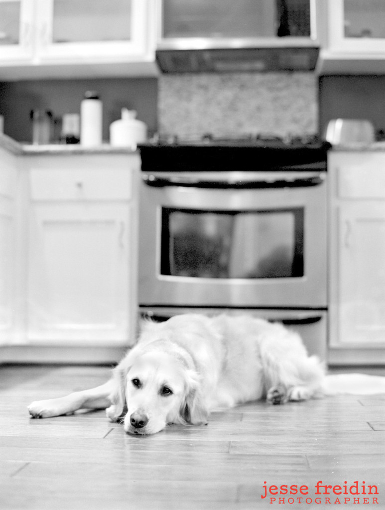 LA Dog Photographer: Paisley the Golden Retriever