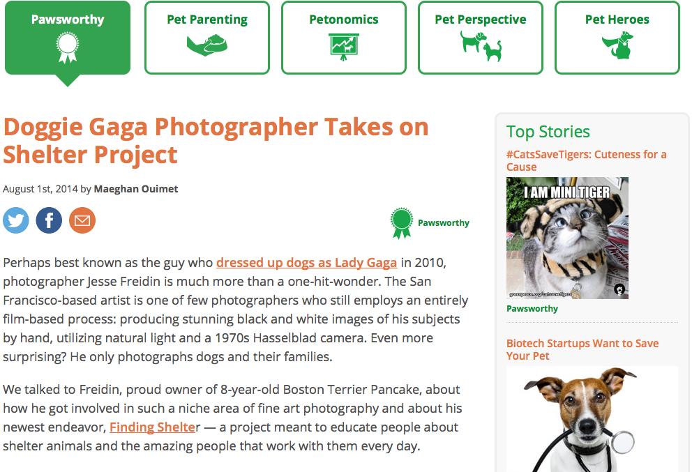 Finding Shelter: Pet Health Blog