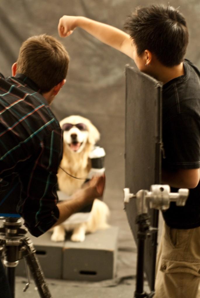 The Doggie GaGa Project
