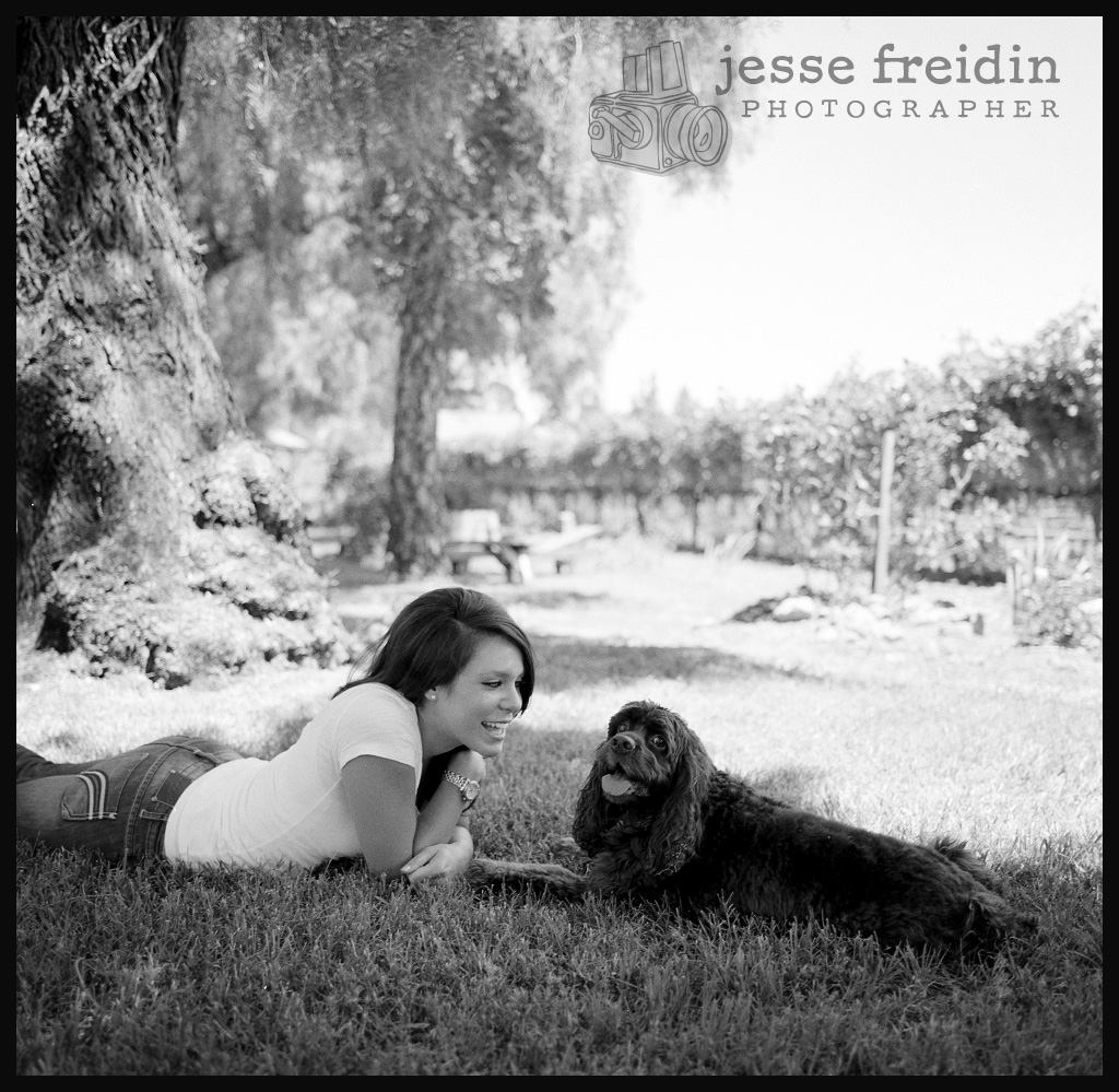 field spaniel photograph black white