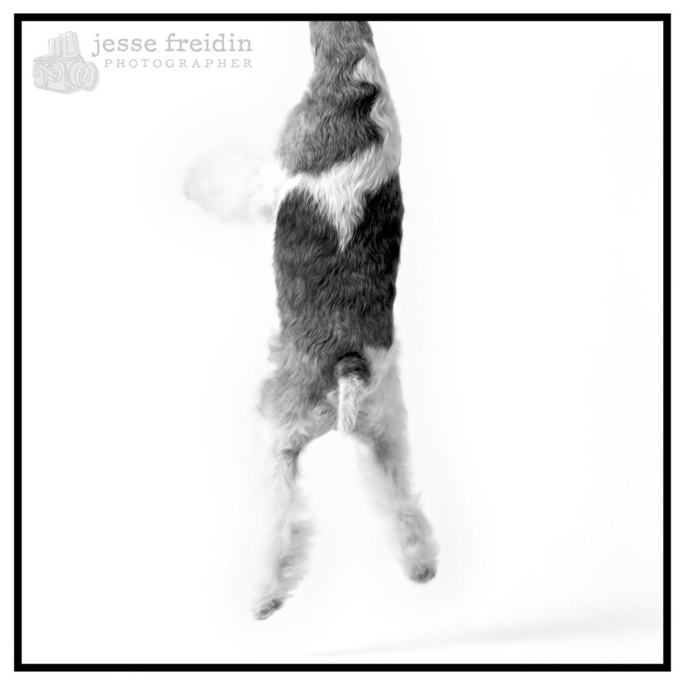 Jesse Freidin: Studio Lighting Dog Portrait