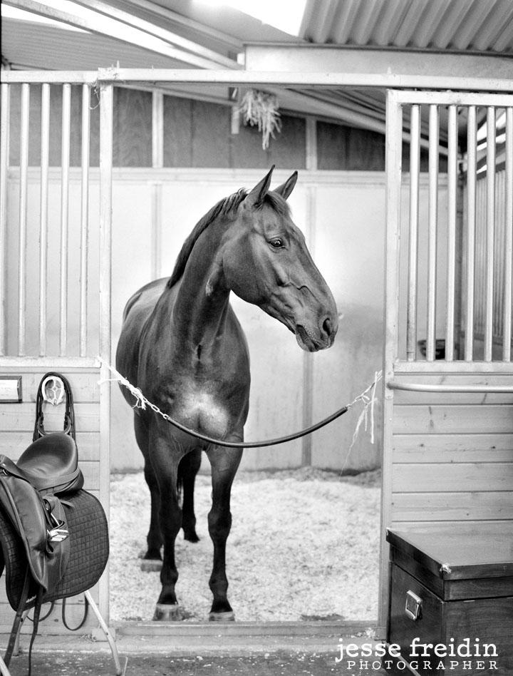 horse photography near los angeles