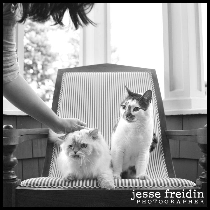 black + white pet photographer