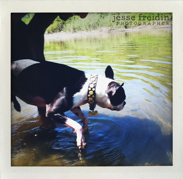 San Francisco's Best Dog Photographer Jesse Freidin