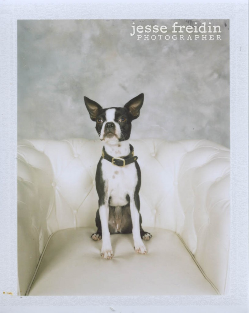 Polaroid Dog Photobooth