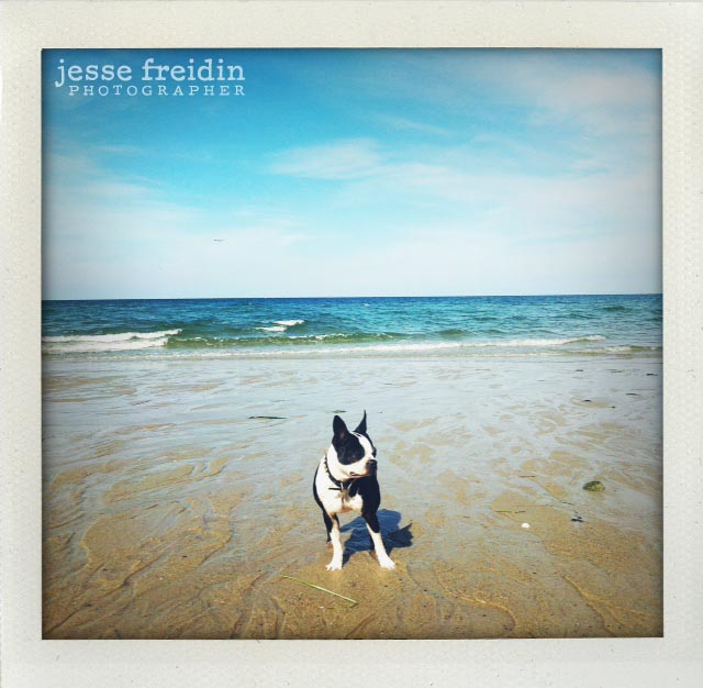 Jesse Freidin Photographer
