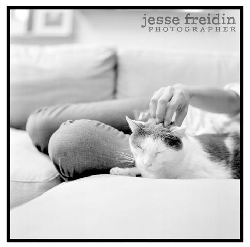 fine art cat photography
