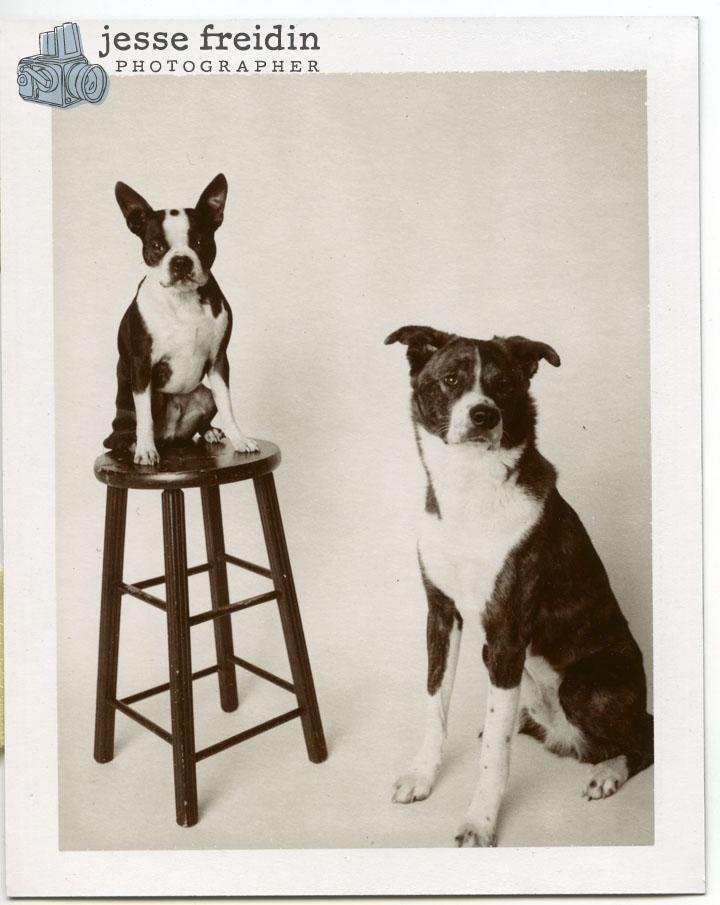 Choco Dogs/Polaroid Chocolate film